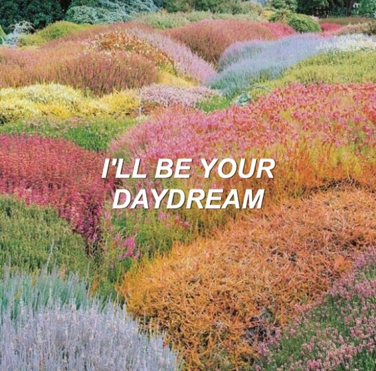 Roses // The Chainsmokers