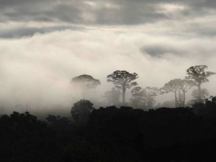 Darien National Park -Panama