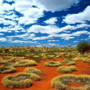 Old Spinifex Rings, Little Sandy Desert, Australia