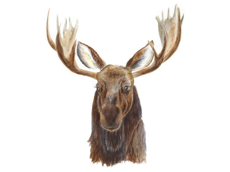 New to TinyToesDesign on Etsy: Woodland Animal Painting Moose Decor Nursery Print Moose Painting Woodland Nursery Moose Print Moose Nursery Antlers Brown Grey (15.00 USD) #nurseryart #tombowpro