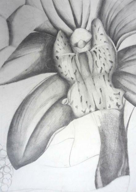Nature - MRS SWAIN'S ART CLASS