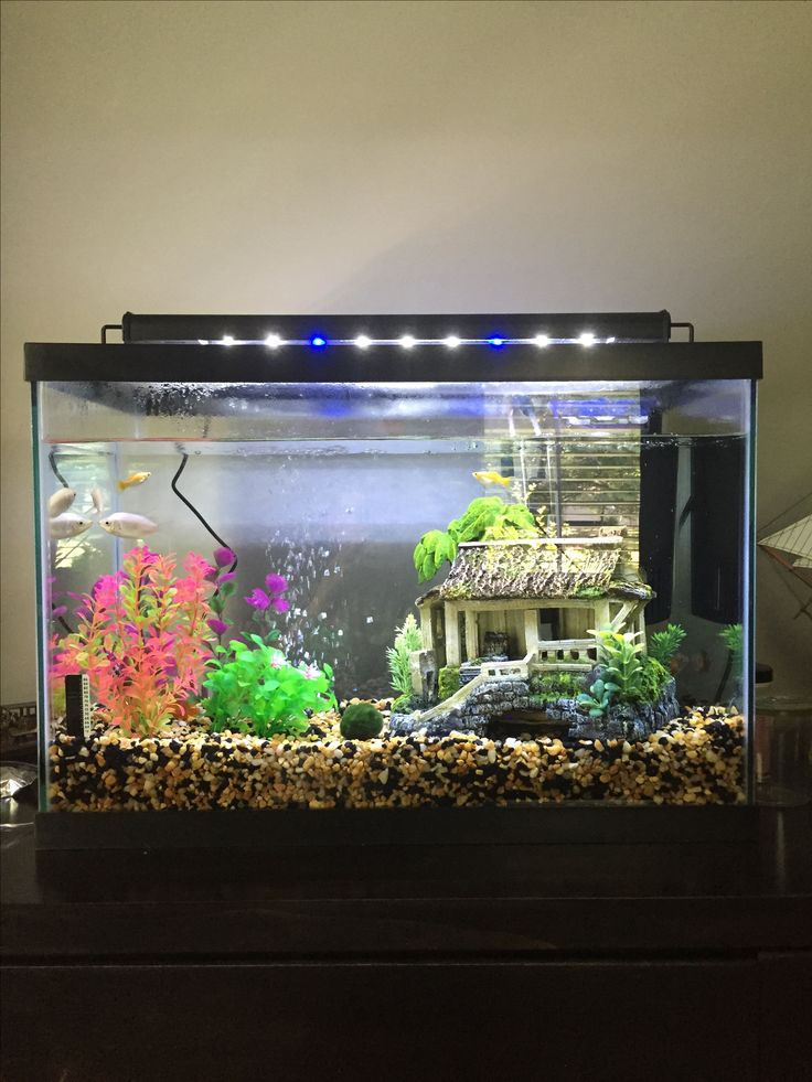 376 best fish fish tanks images on pinterest fish for Two gallon fish tank