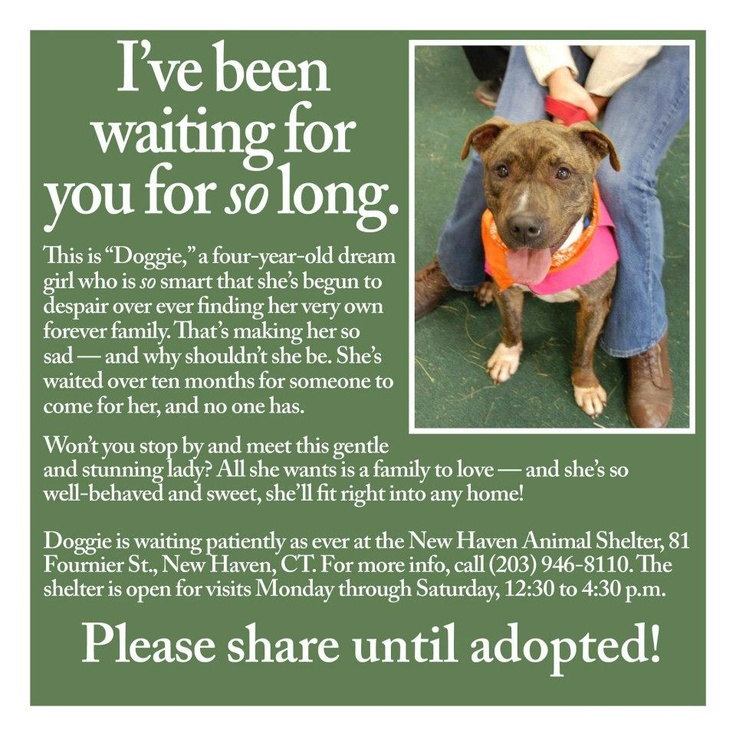 """New Haven, CT Animal Shelter """"Doggie"""""""