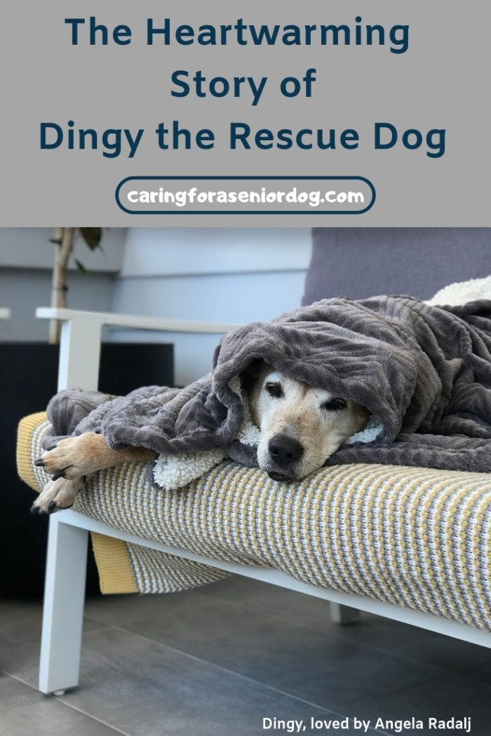 The Heartwarming Story Of Dingy The Rescue Dog Rescue Dogs Dog Care Pet Sitters International