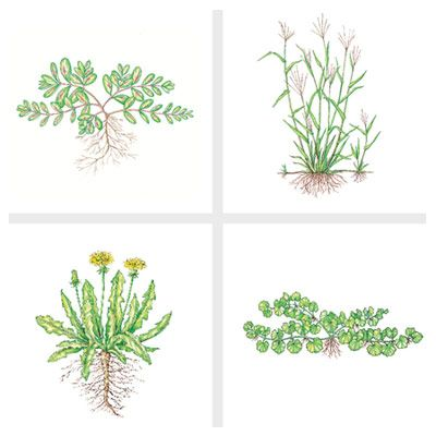 getting rid of weeds...: Old House, Illustration
