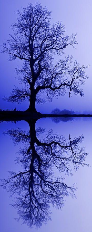 Tree Skeleton Reflection  #wallartroad #treeart