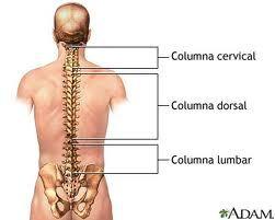 Encima de una camilla: Anatomía de la espalda humana. Lesiones y patologías