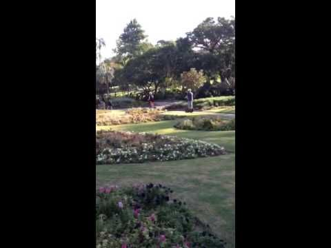 Segway Tour in Brisbane Botanical Gardens. Thank you Andrew, Monica & Br...