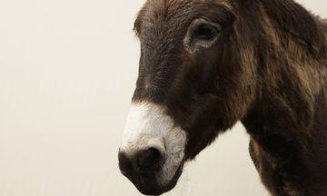 Is Donkey's Milk The Next Big Health Trend?