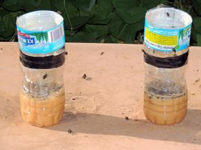 Homemade Fly, Bug and Mosquito Trap: Plastic Bottle Bug Trap