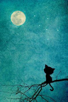 Lil' Black Cat Moon