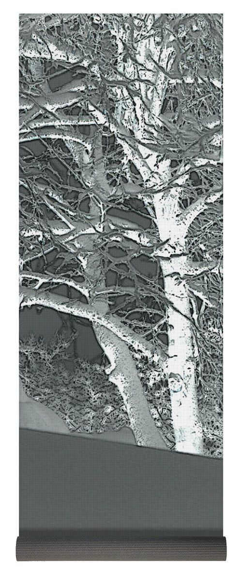 Original Fine Art Abstract Black and White Photography by DL MacMillan. At the top of a snowy hill, a snow covered birch tree stands alone. Copyright DL MacMillan & http://dlmacmillan.com - All Rights Reserved. Buy original fine art prints and canvas by DL MacMillan at northrivereditions.com   Buy art online. Buy photography online   http://northrivereditions.com  www.dlmacmillan.com