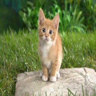 Cute Ginger Cat Hd Wallpaper