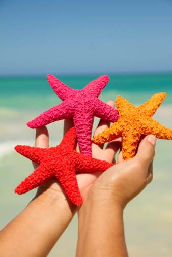 starfish get them at a craft store and paint bright colors or any color combos to fit room schemes teal coral and brown and add to sand and shells in a bowl as decor accent piece
