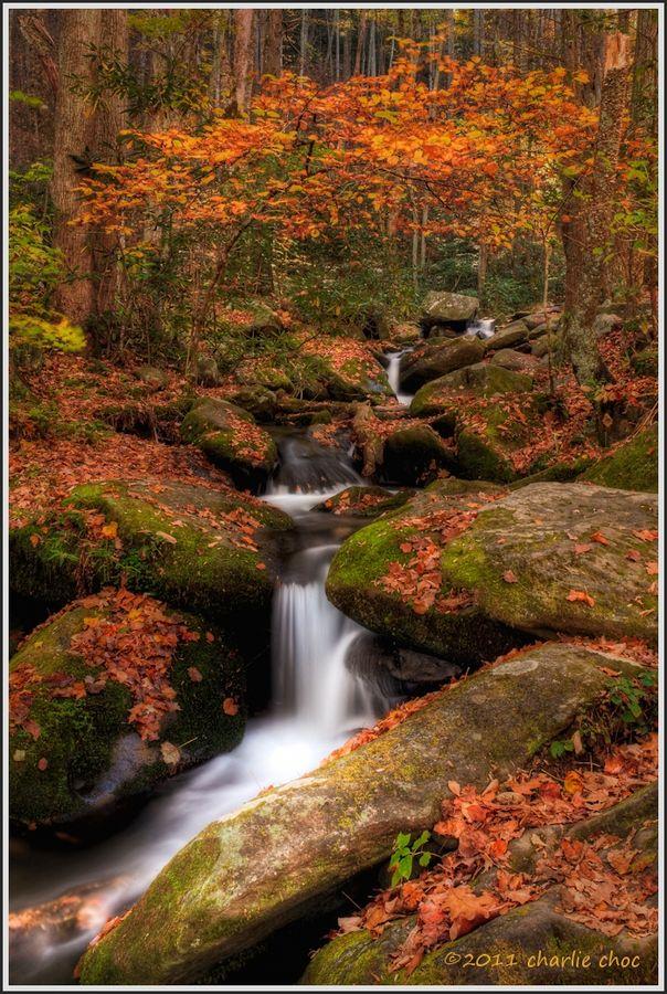 Roaring Fork, Parque Nacional grandes Montañas Humeantes.