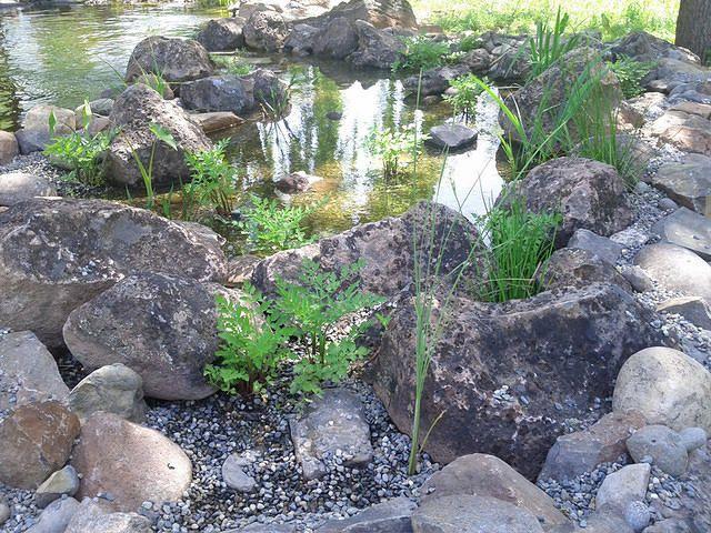 Bog wetland filter for a 20 000 gal kio pond loomis ca for Koi pond bog filter