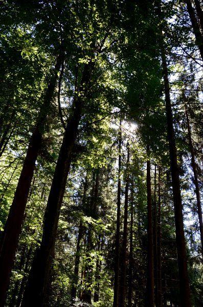 http://elpachinko.com/viajes-a-alemania/selva-negra-consejos-para-viajar/  ¿Preparando un viaje a Alemania para 2015? Te damos diez consejos para viajar a la Selva Negra