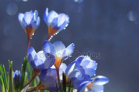 Bouquet di fiori di primavera — Immagini Stock #67868253