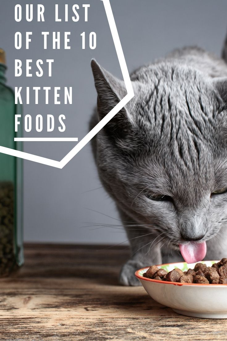 11 Best Kitten Foods With Our Most Affordable Pick 2020 Guide Kitten Food Cat Care Best Cat Food
