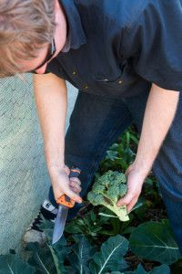 Recipe: Camp oven - Broccoli Dip