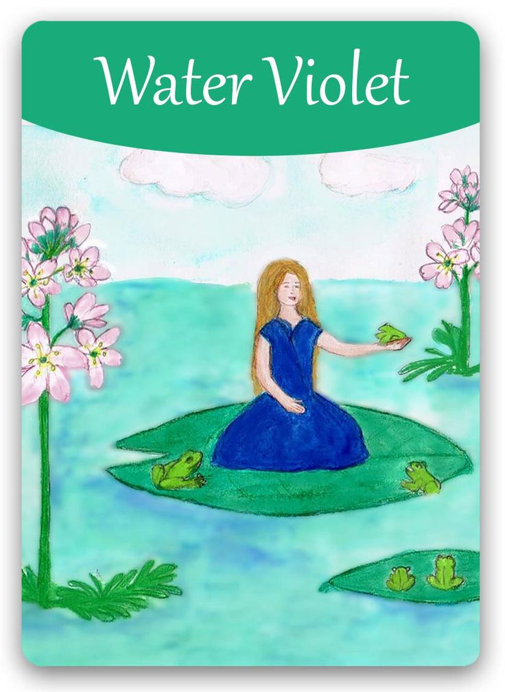 Bach Flower Cards [Water Violet] - Water Violet personalities present an image of superiority, capability, and calm control. They never fall apart in an unexpected situation, but can take charge. This dependence from other people leads to an emotional drain that can cause a Water Violet person to begin believing that they truly are special and thus they become prideful. After treatment, person is able to use his self-confidence and independent attitude for the good of others as well as…