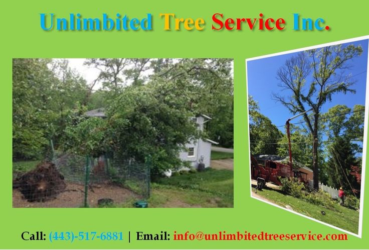 Silver Spring Tree Removal Tree Services, Tree Cutting & Tree Care