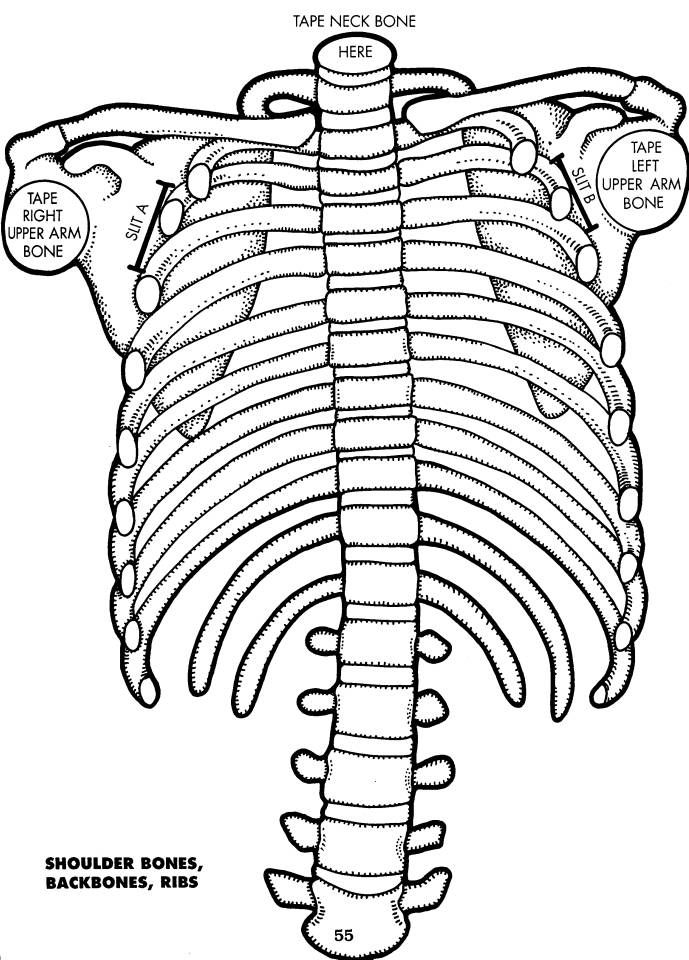 Maxi-kostra i s orgány - černobílé