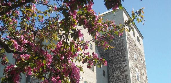 Turun linna and flowers