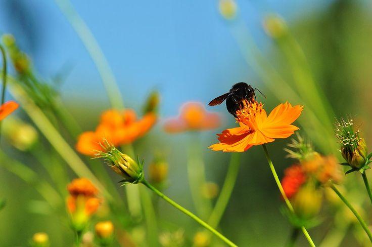 Black Bee - Jardin Botanico - Cordoba @ Argentina