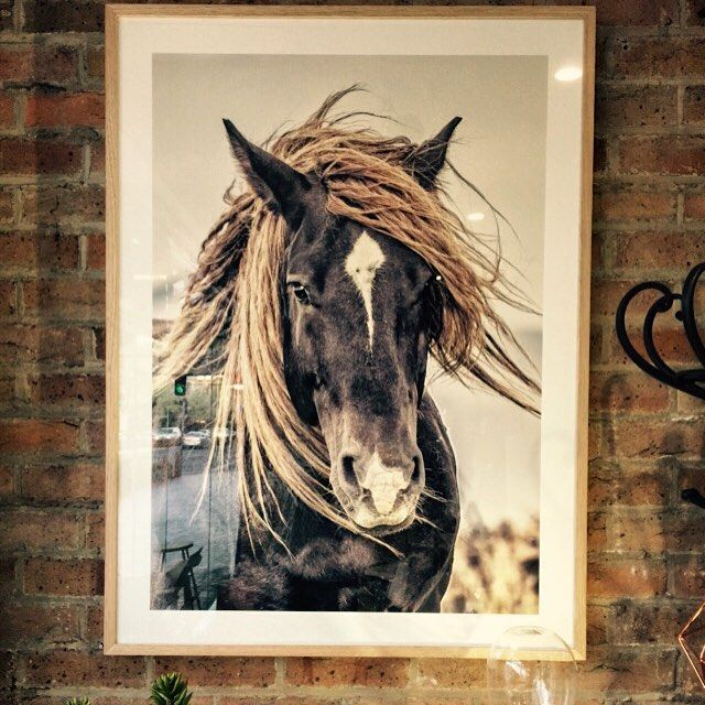 The beauty and mystery of this Lone Mustang is captured in this gorgeous artwork. 85 x 115cm. Only one available, be quick to snap me up! $449#lonemustang #somuchmystery #wildandfree #horses