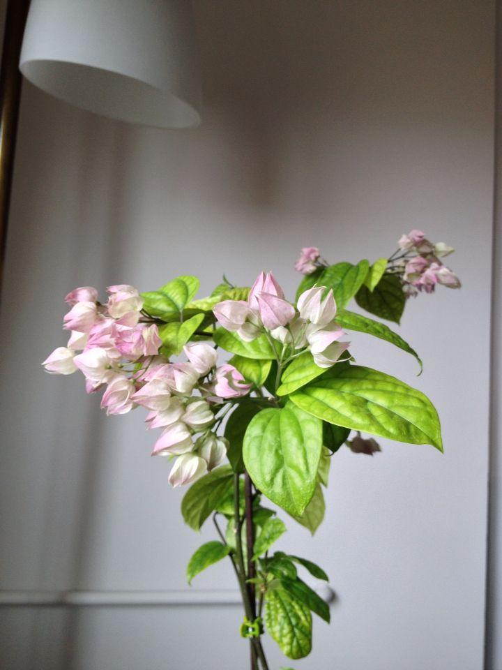 Kanayan kalpler çiçeği solduğu zaman