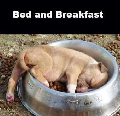 BED AND BREAKFAST…. DOLCISSIMO!!! http://www.ilpeggiodellarete.it/bed-and-breakfast-dolcissimo/ #foto #cucciolo #cane