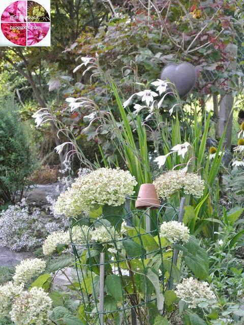 10 best Kräuter im Garten images on Pinterest Backyard patio - allium beetstecker aus metall