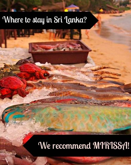 Sri Lanka is possibly our favourite family travel destination. Of all the coastal areas we've visited, Mirissa is our paradise. Read why Mirissa #SriLanka ticks all our boxes. #travel #familytravel #food #worldtravelfamily