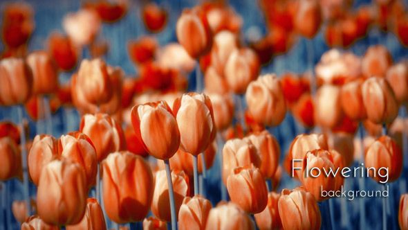 """Flowering Spring Garden. From """"Flowers with Indigo"""" photo and video collection."""