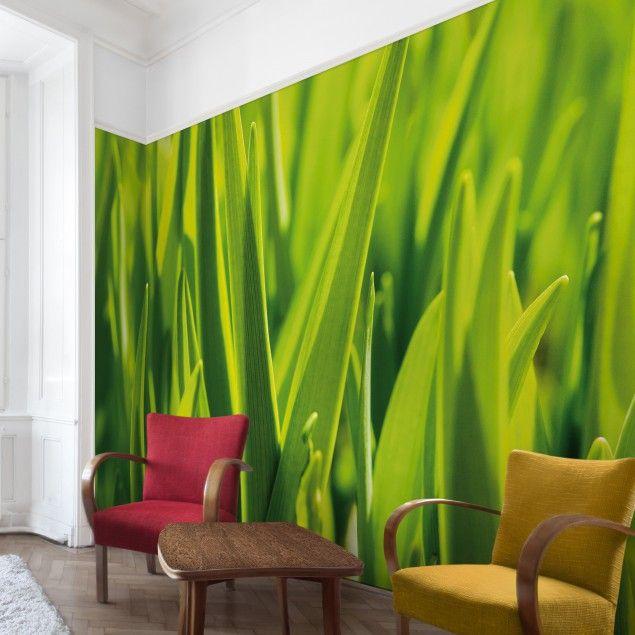 design : fototapete wohnzimmer grün ~ inspirierende bilder von ... - Fototapete Wohnzimmer Grun