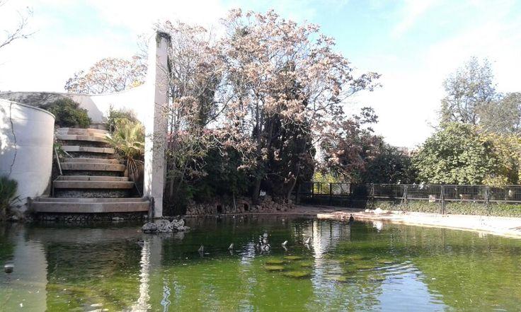 Japanese style lake in spain