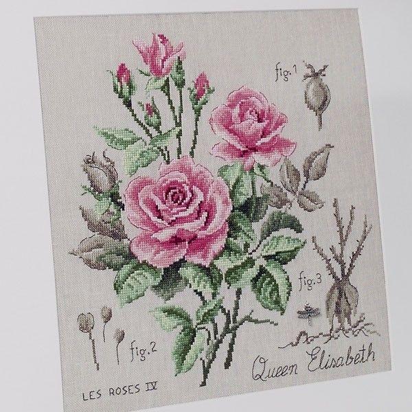 Lin : Étude à la rose «Queen Elisabeth» (maxi-grille) à broder au point de croix