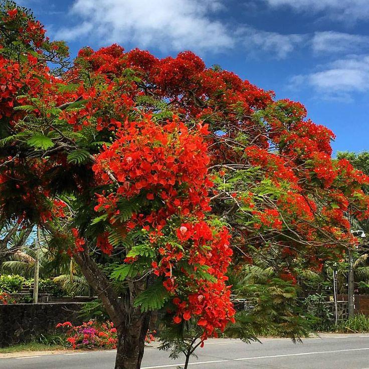 30 degrés sur l'île de La Réunion. Voici 10 choses que seuls les réunionnais font à Noël. Moment magique. Le 9 est tellement vrai.