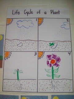 This is a good example of a student's work of drawing their own version of how a flower grows. Good activity to do so students can have some creative freedom and draw out the cycle.