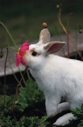 Stopped to smell the flower. I love bunnies :) Just keep them out of your vegetable garden :)