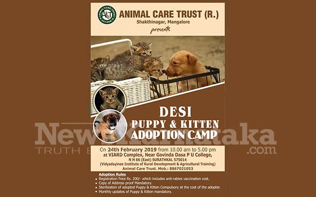 Act To Organise Another Adoption Camp For Desi Dogs Cats At