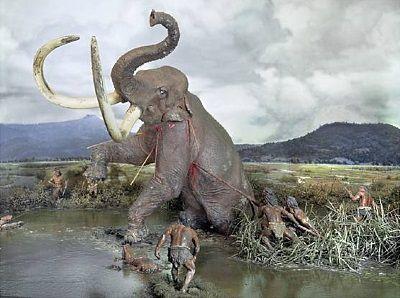 prehistorische opgravingen nederland - Google zoeken