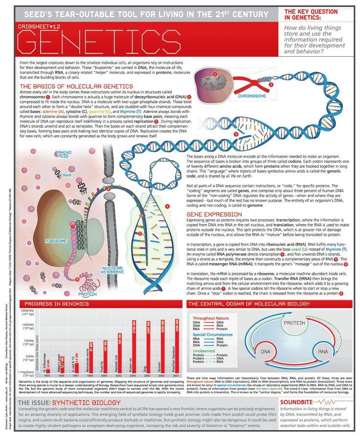12 best Genetics images on Pinterest Ap biology, Biology lessons - new blueprint gene expression