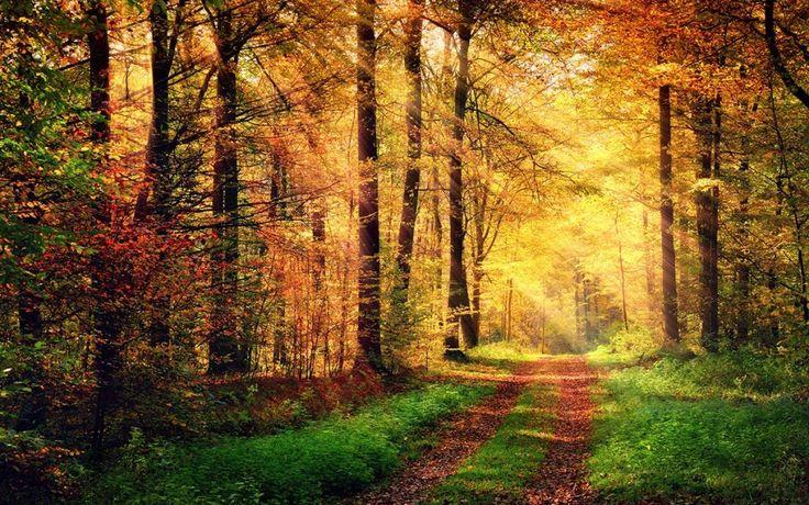 Réflexions d'automne. #passionslibido #mieux-être