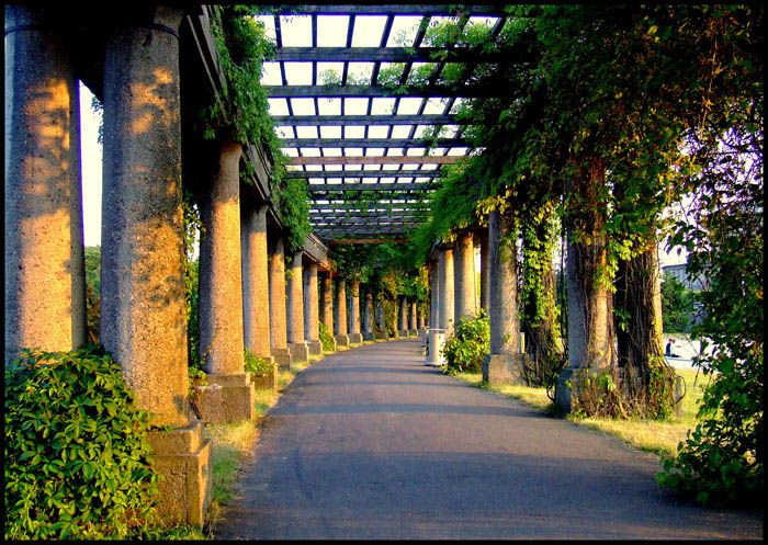 Pergola in Wroclaw through the eyes of cyborg83