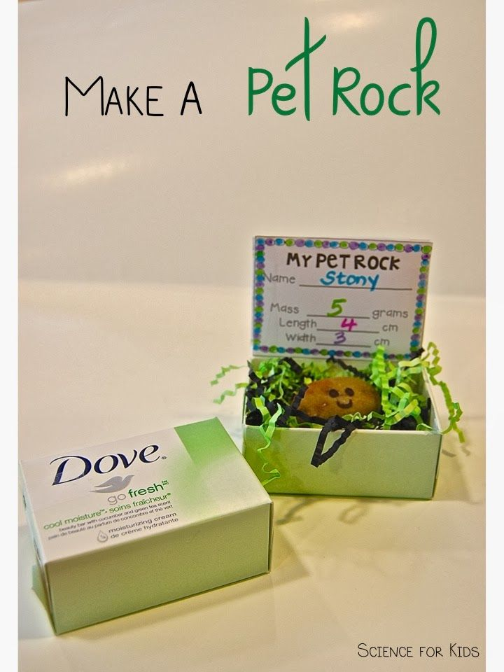Use a soap box to make a cute little home for your pet rock! Great way to wrap up my rock unit with my firsties! ScienceForKidsBlog.blogspot.com