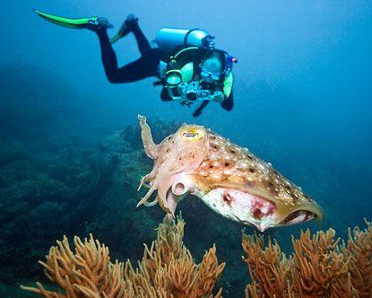 Antigua And Barbuda   Antigua Scuba Diving - Antigua Dive Sites