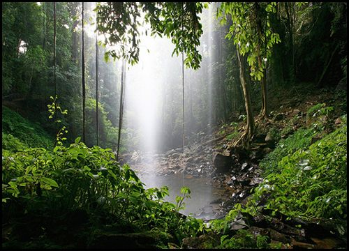 39 Best Images About Australian Rainforests On Pinterest Victoria Australia Waterfalls And