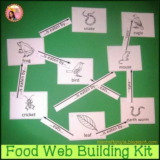 How to Make a Food Web - A Complete Guide. Food chain and food web kits. Hands-on exploration of all possibilities for different habitats. $ #science